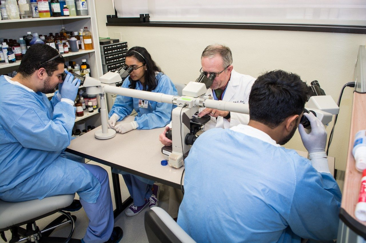 Histotechnology educator reviewing tissue on slides with students