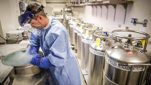 Daniel Esqueda, senior clinical cell therapy specialist, retrieves frozen cord blood to be thawed for natural killer cell production when a patient is scheduled for treatment.