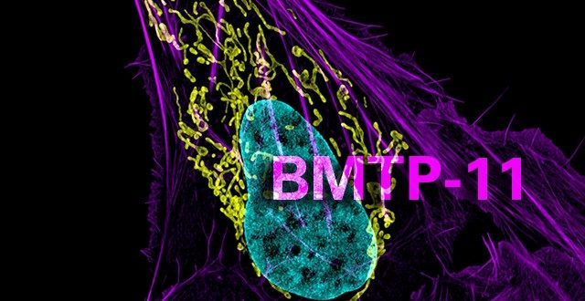 BMTP-11 for osteosarcoma
