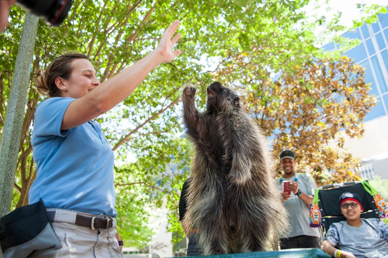 MD Anderson pediatric patients enjoy learning about animals from the San Diego Zoo