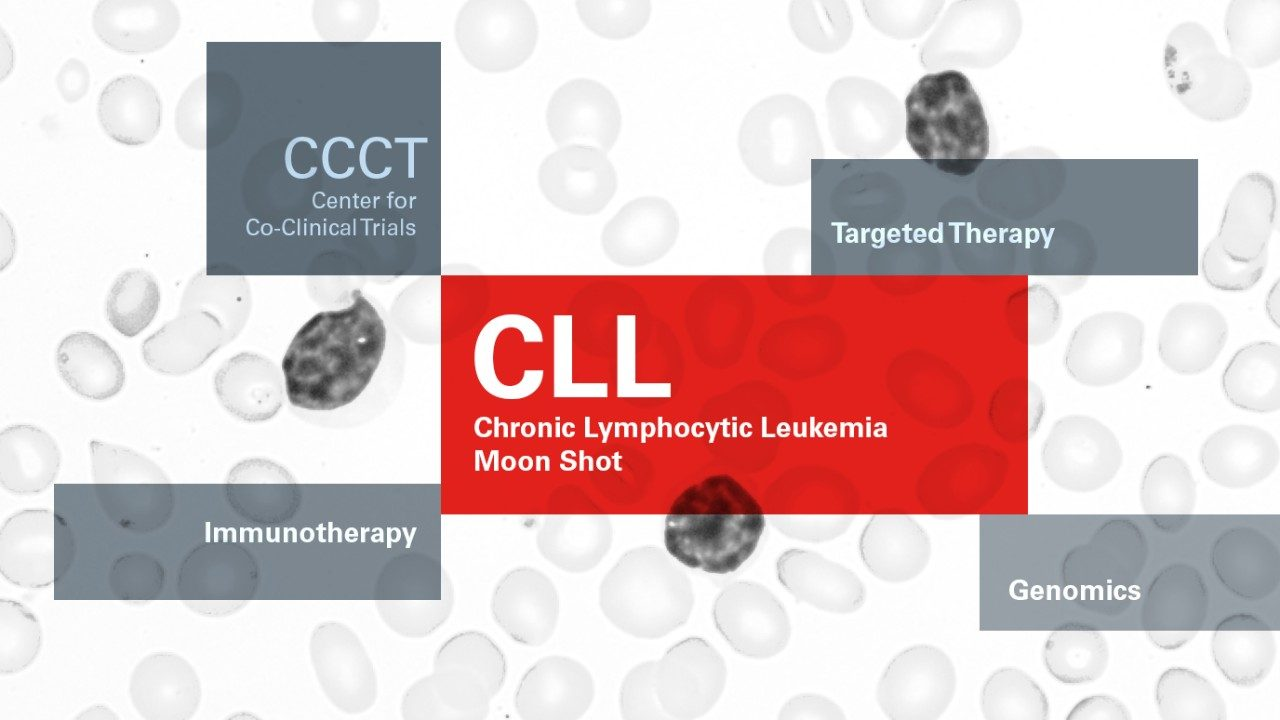 Targeted therapy for the most common leukemia | MD Anderson Cancer