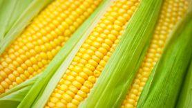 Do GMOs cause cancer? | MD Anderson Cancer Center